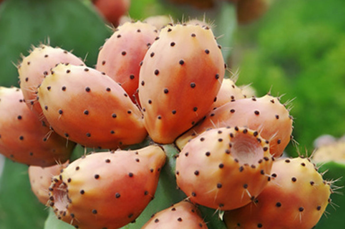 7.-Prickly-Pear-Seed-Oil.jpg