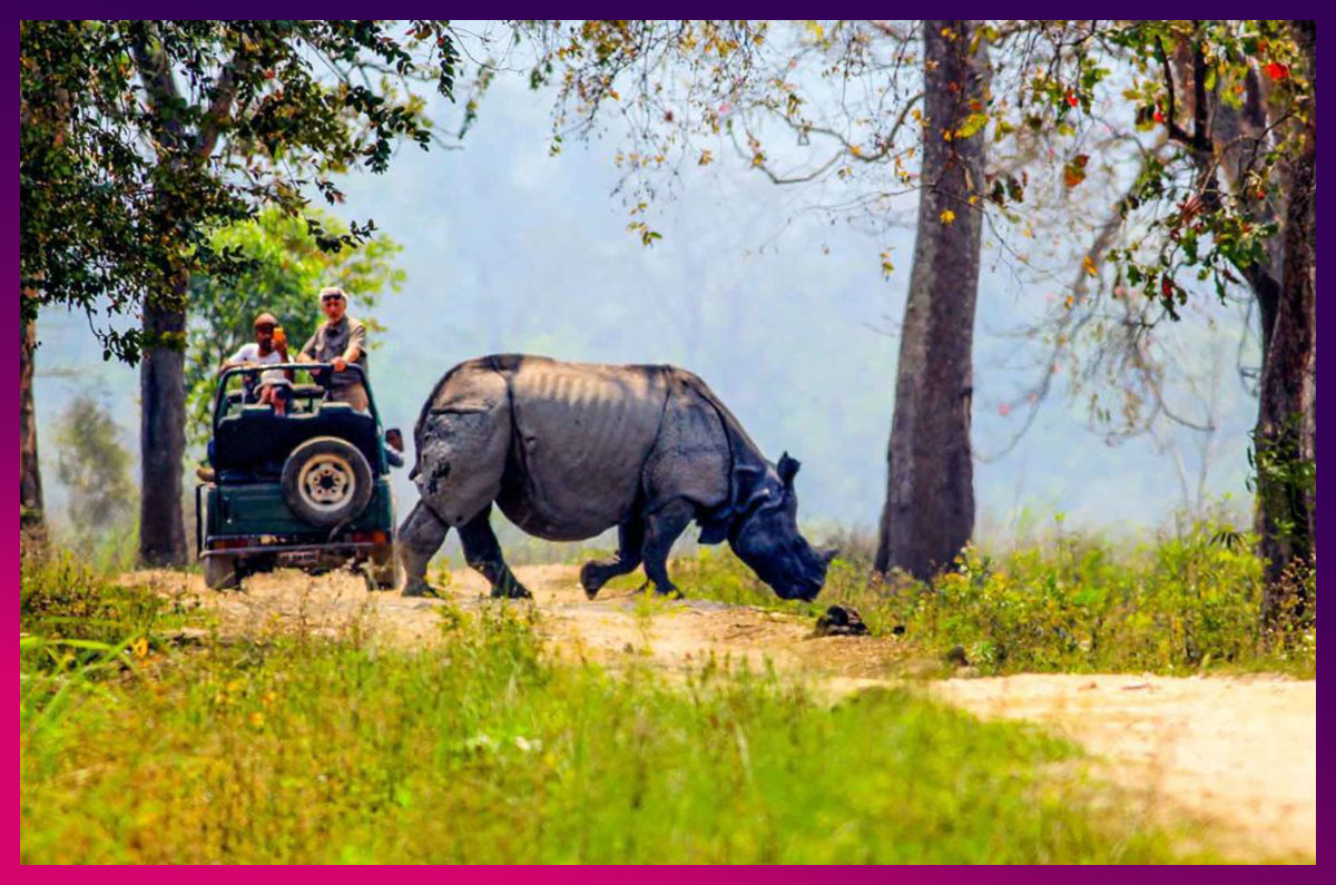 6.-Jeep-Safari-In-Kaziranga-National-Park-facebook.jpg
