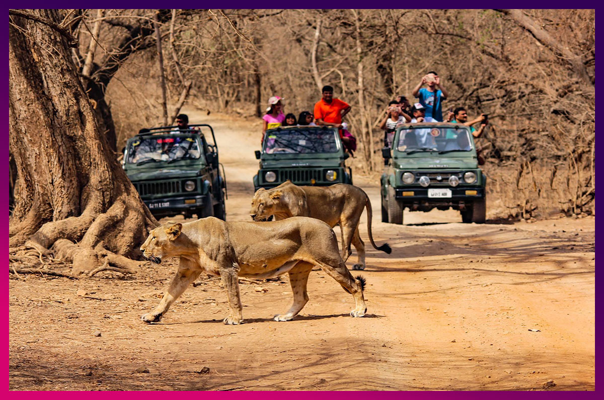 7.-Jeep-Safari-In-Gir-National-Park--twitter.jpg
