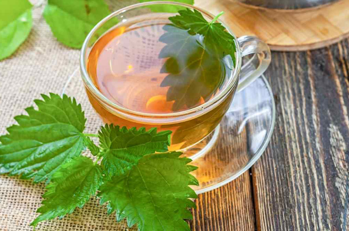 4)-Stinging-Nettle-Tea---pinterest.jpg